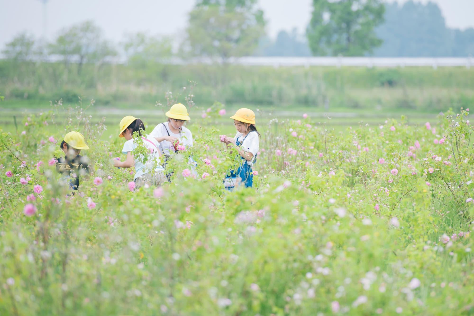 ローズファームケイジの畑でばらに触れる子供たち