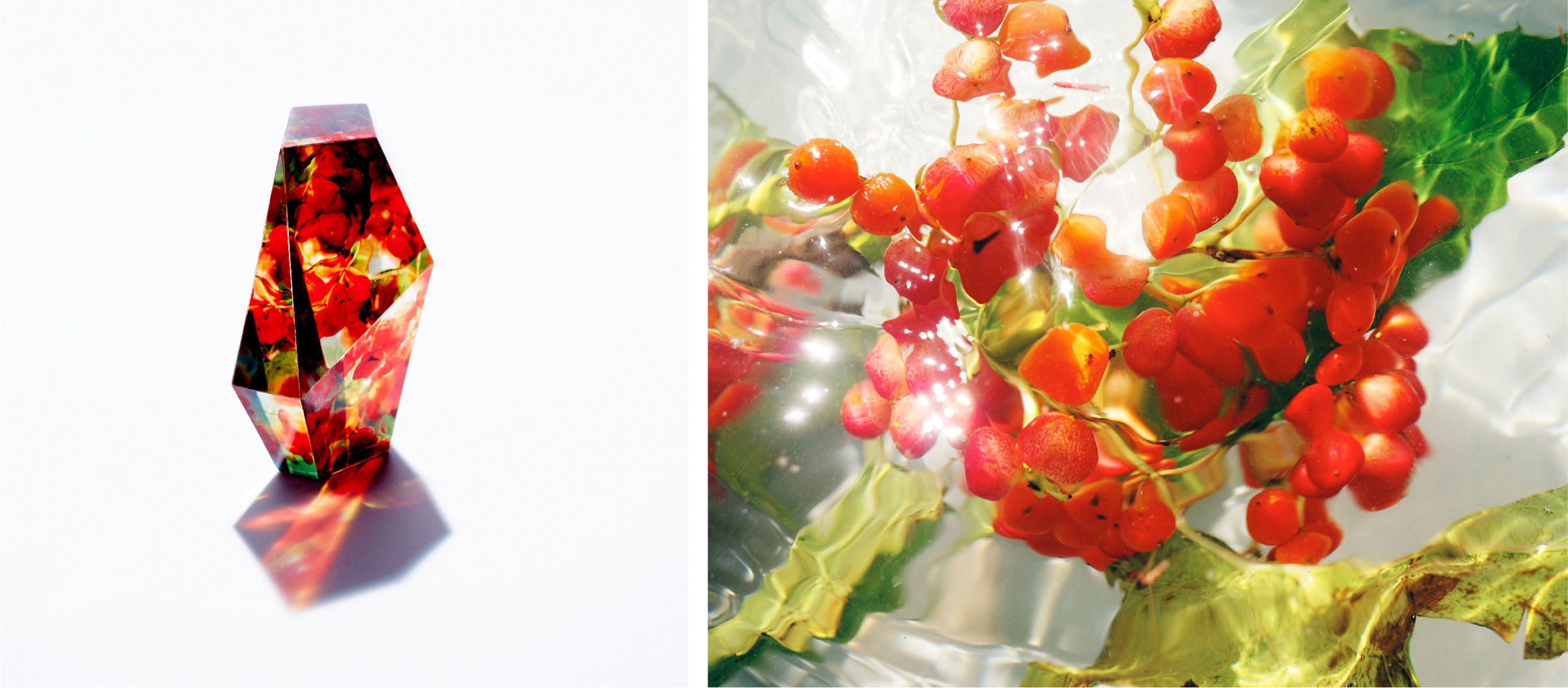 写真が咲かせる美しい「HANAYA(花屋)」
