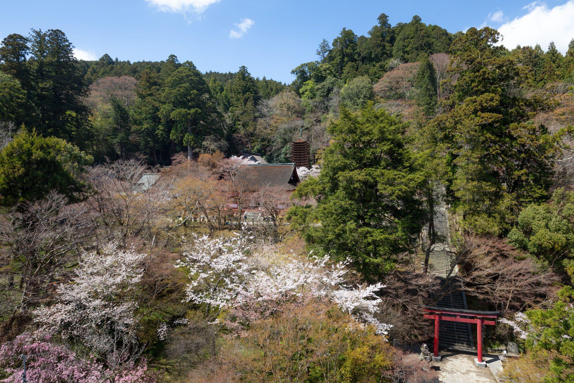 谷の向かい側から見た談山神社。鳥居と塔が同居している景色は、神仏習合の姿を残している。