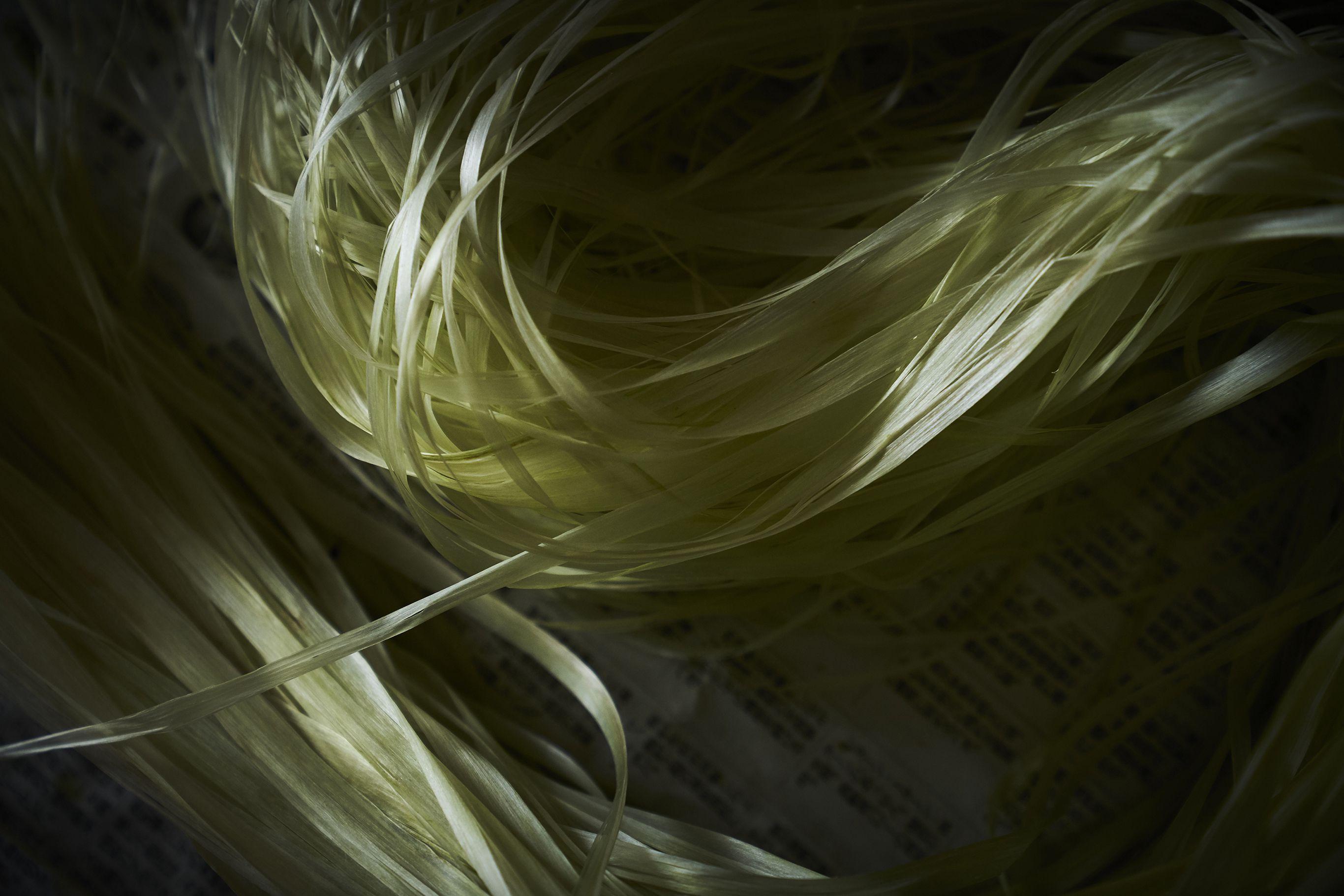 からむし(苧麻)の茎の表皮の内側にある繊維。内奥から放たれる光沢の美しさに魅了される。上布はこの繊維を裂いて作った糸で織り上げられる。写真提供:昭和村