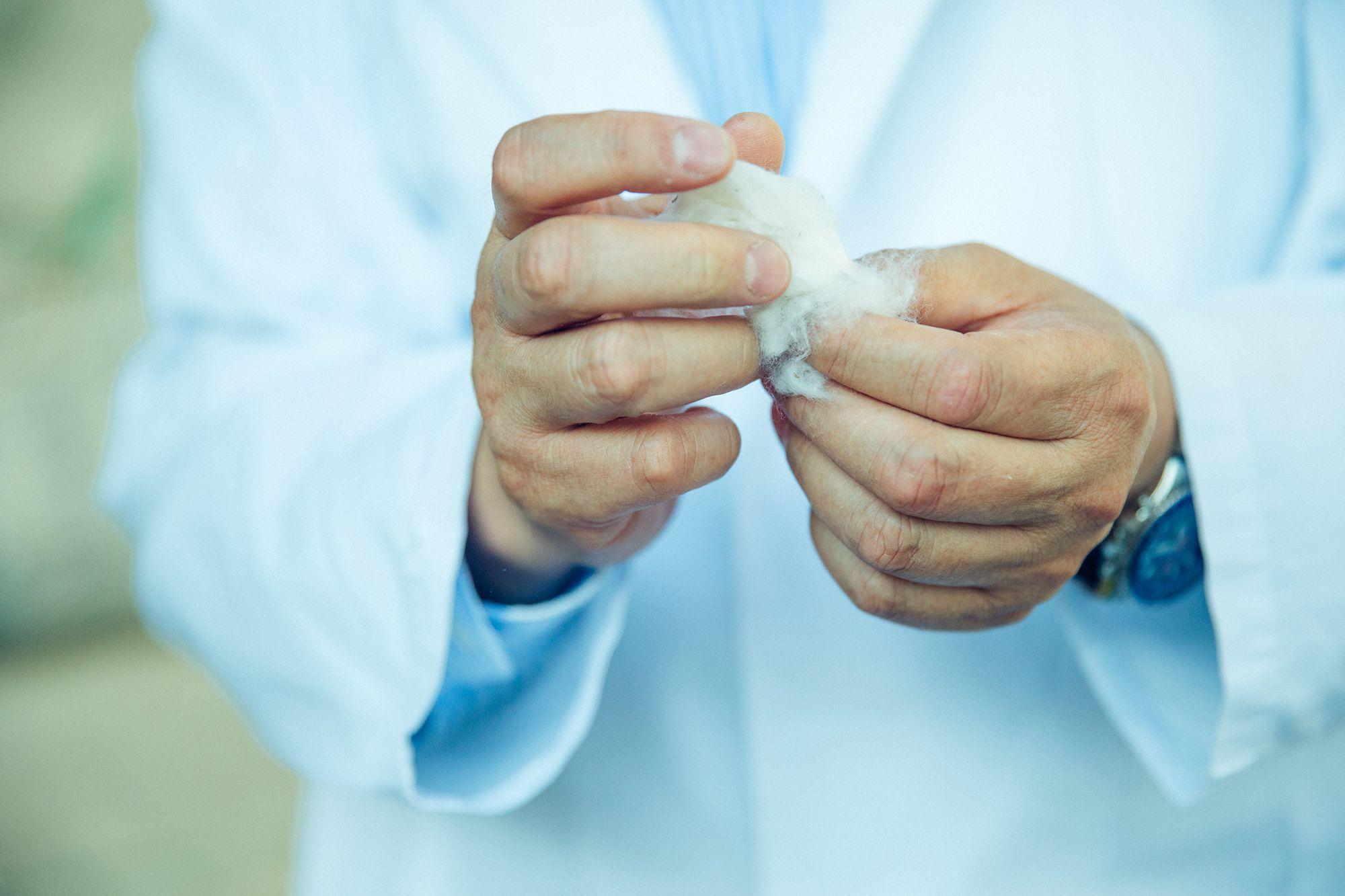 アリゾナから届いたばかりの原綿を確かめる小迫。繊維系が太く、カールしているのが特徴だという。