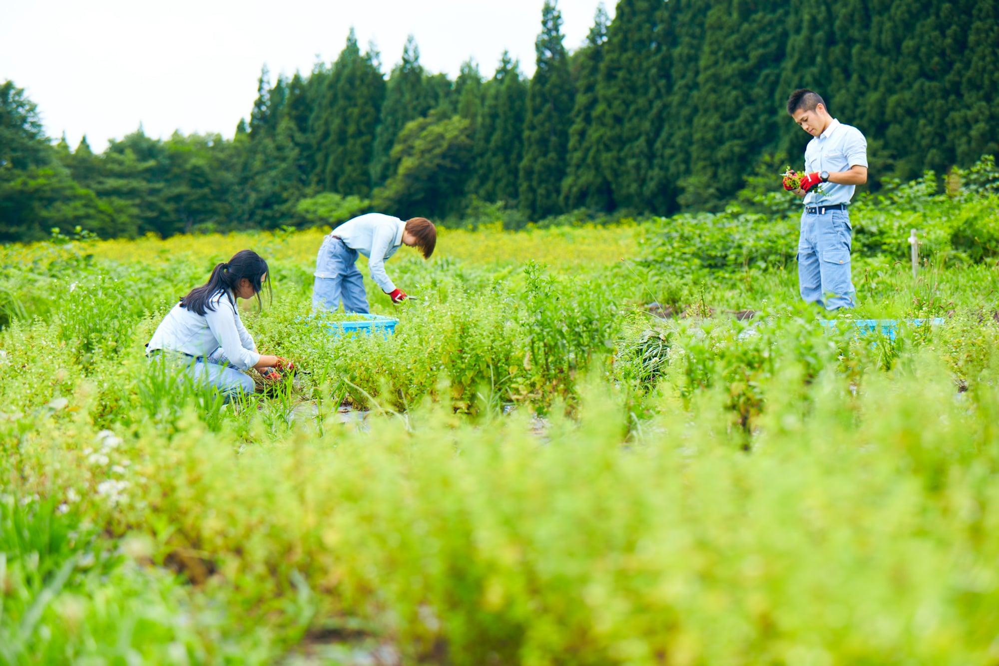 ここで育まれる植物は、すべて無農薬かつ自然の条件を生かした独自の手法で栽培される。トレーサビリティ(生産地・流通経路の明確化)を実現し、2018年には有機JAS認証も取得している。