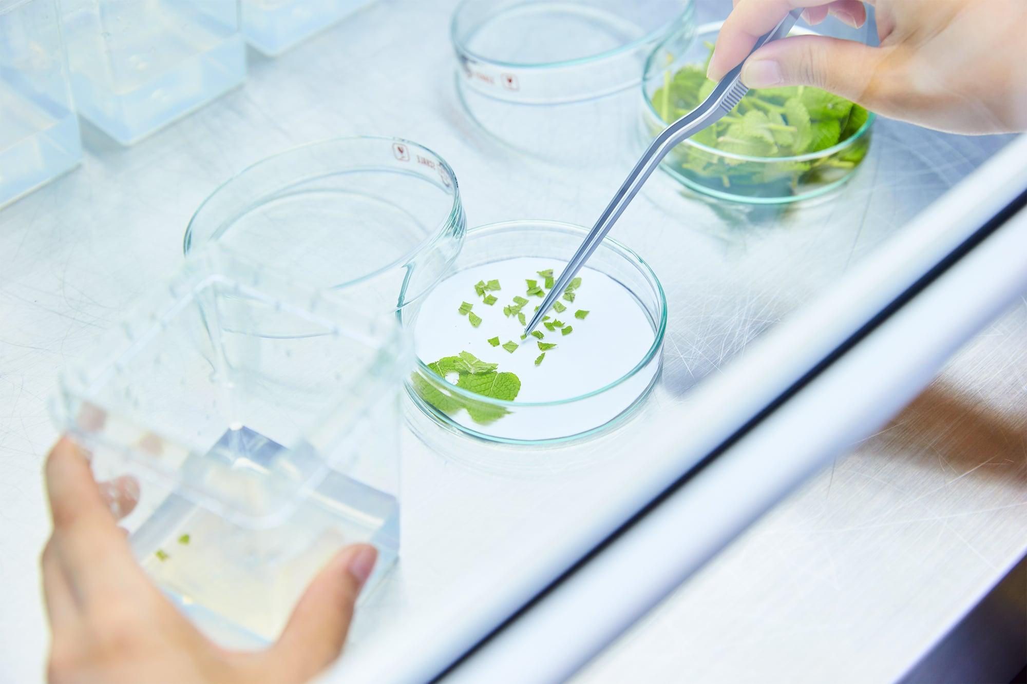 白神山地の良質な水と土によって育まれた天然の植物成分を抽出し、独自の美容成分として化粧品づくりに活用するためのバイオテクノロジー研究を行っている。