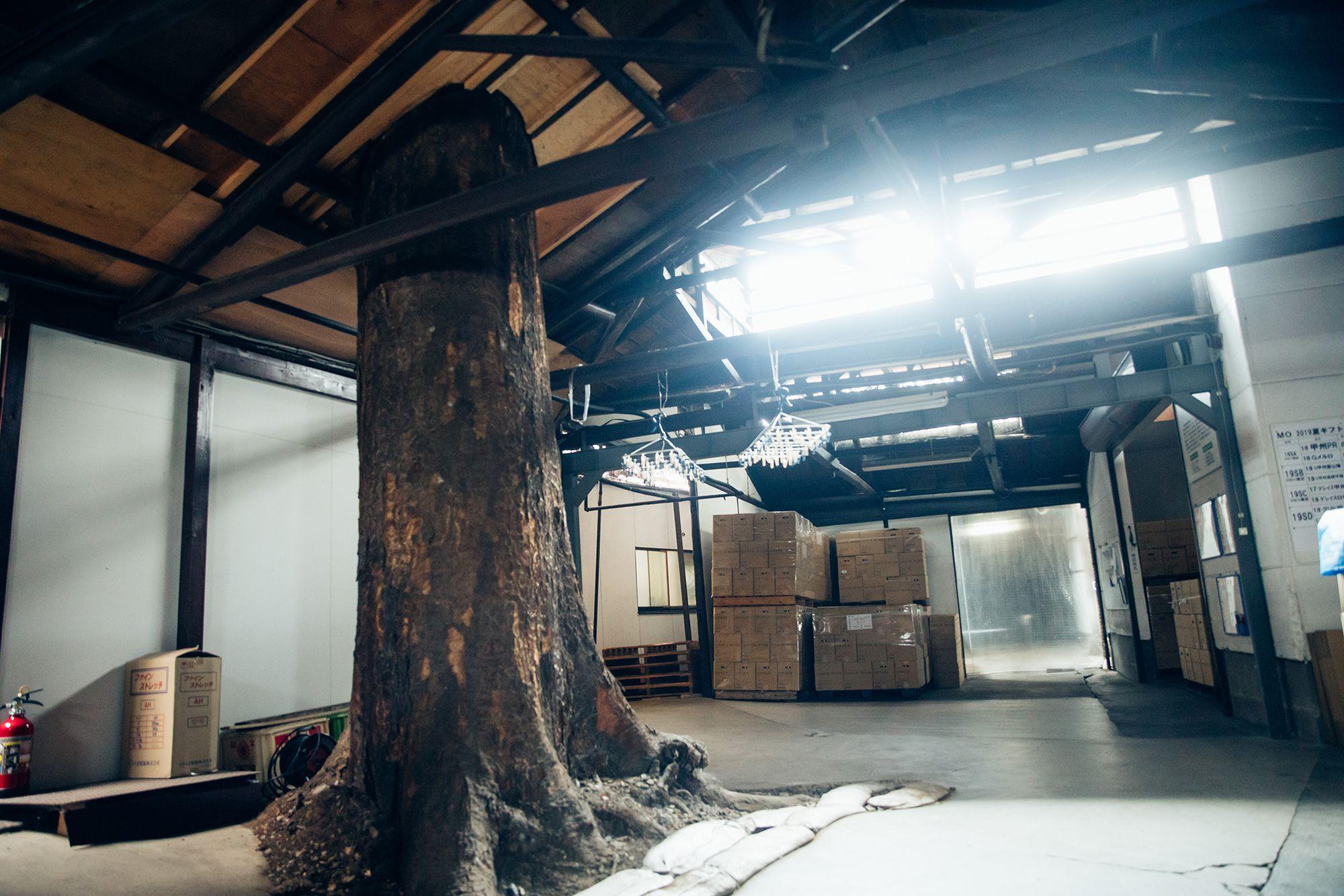 1923年の創業時から育ち続けるケヤキの木。醸造施設の拡張時、この守り神のようにそびえ立つ木を引き抜いてしまうのは忍び難く、屋根を貫通する形で残された。