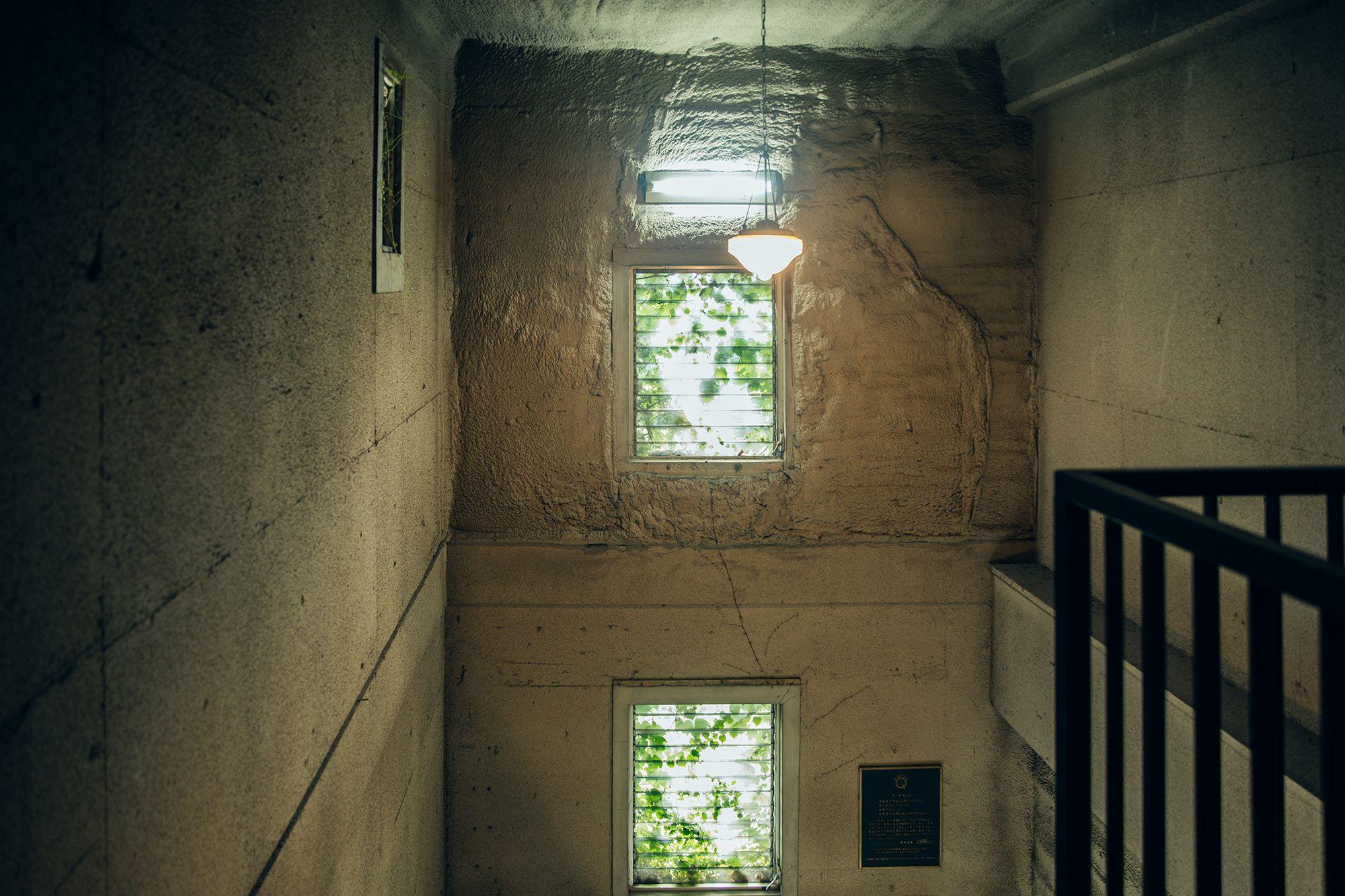 建物にぶどうの蔦が絡まる勝沼町等々力のワイナリー。窓からぶどうの葉を透過した光が美しい。