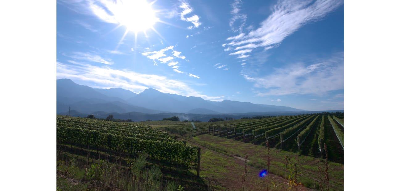 2002年に開園した、北杜市明野の三澤農場。明野は日本一日照時間の長い土地。12ヘクタールの面積をもち、シャルドネやメルローなど欧州系品種のほか、金賞を受賞した甲州が垣根仕立てで栽培されている。