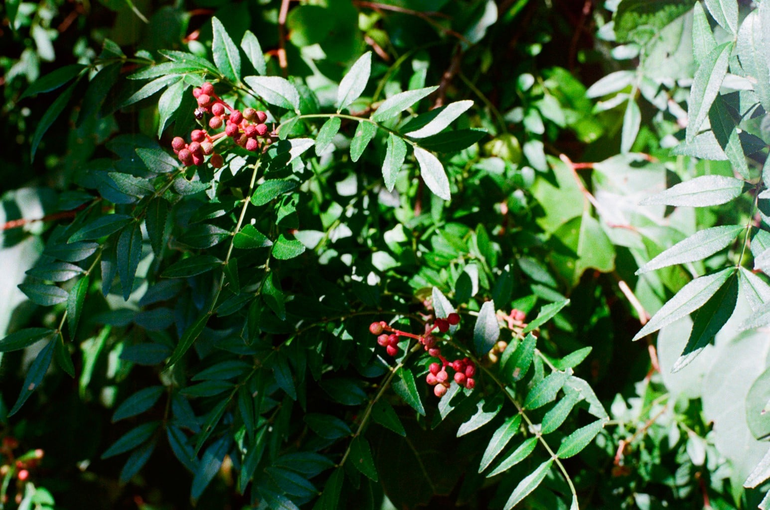 寒露イメージ 秋の野山の植物