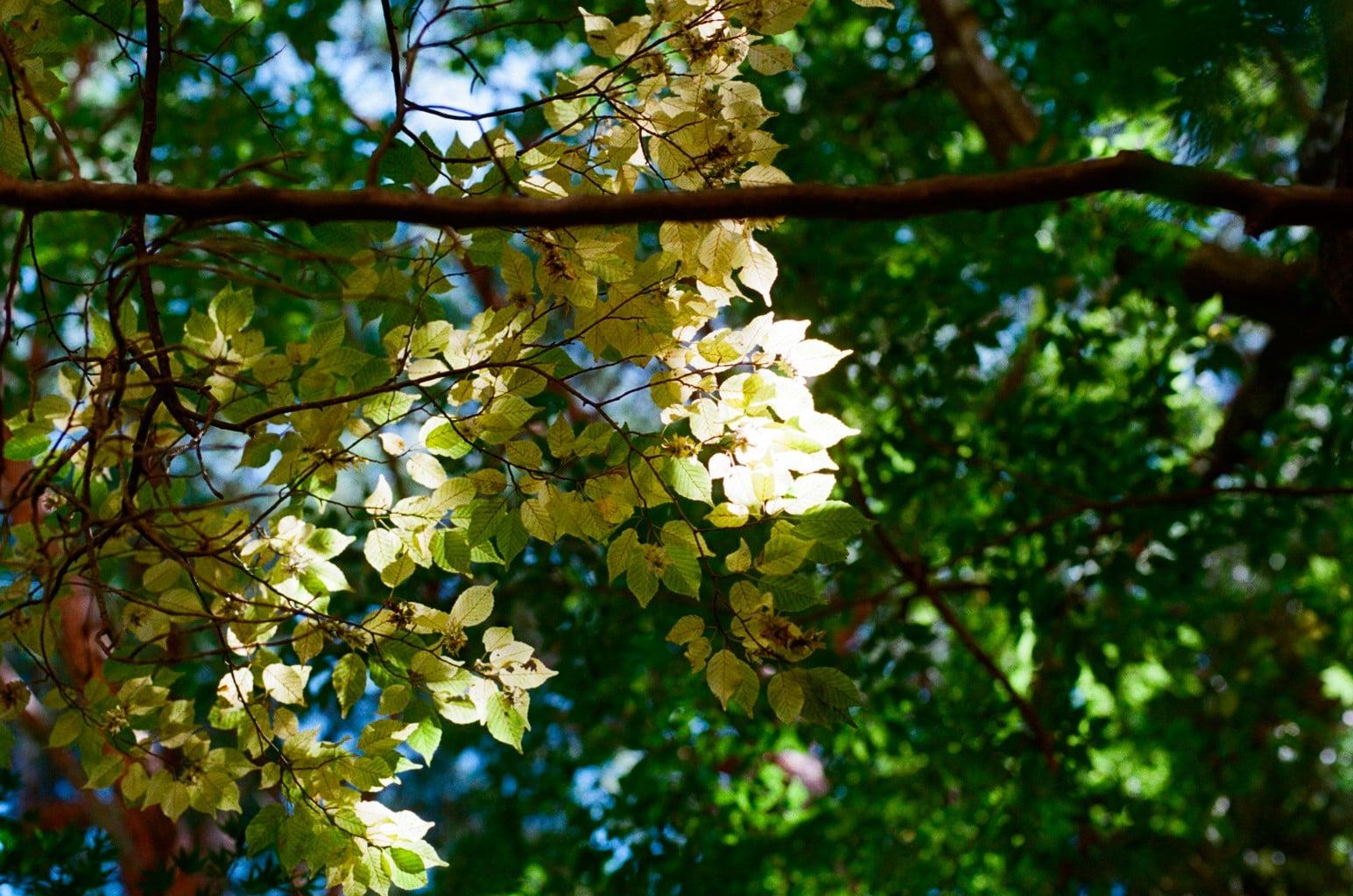 寒露イメージ 黄葉する落葉樹