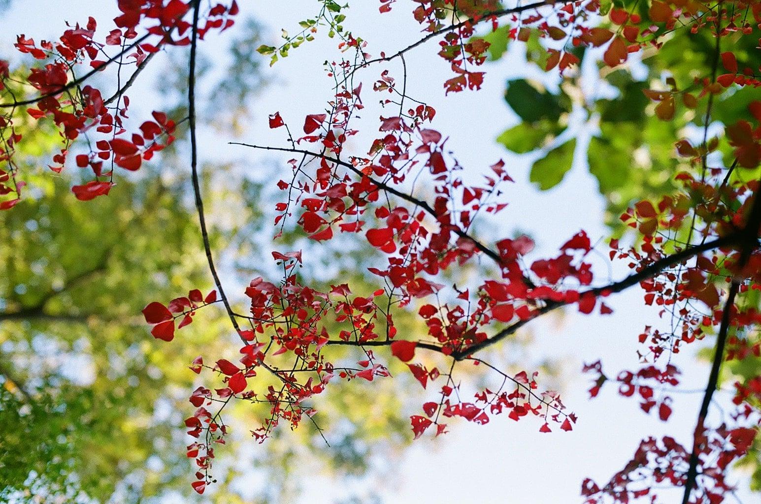 立冬イメージ 紅葉の落葉