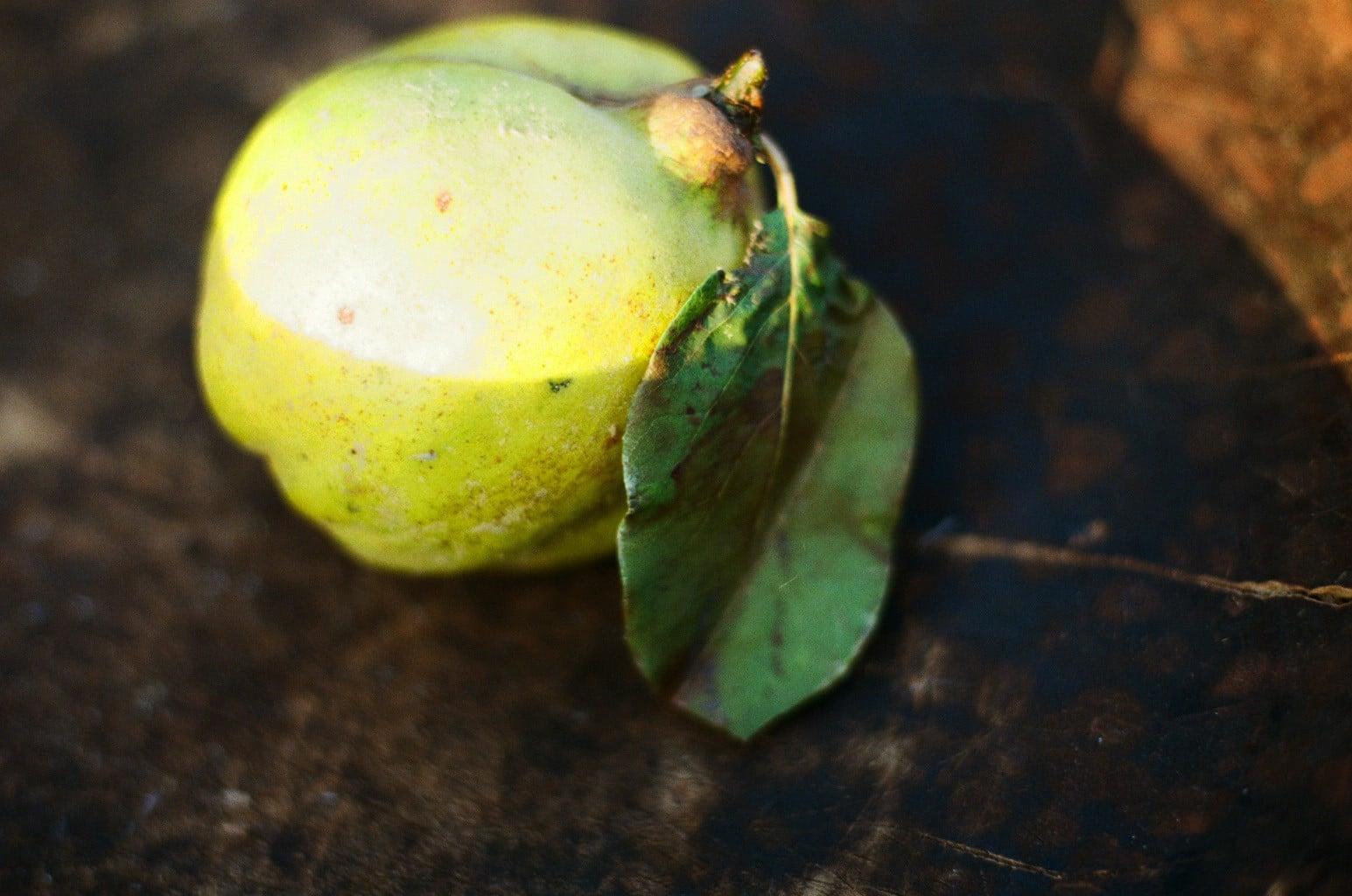 小雪イメージ 花梨の実