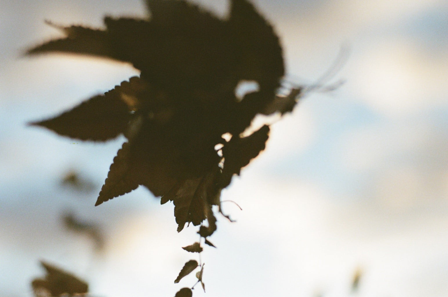 小雪イメージ 落葉