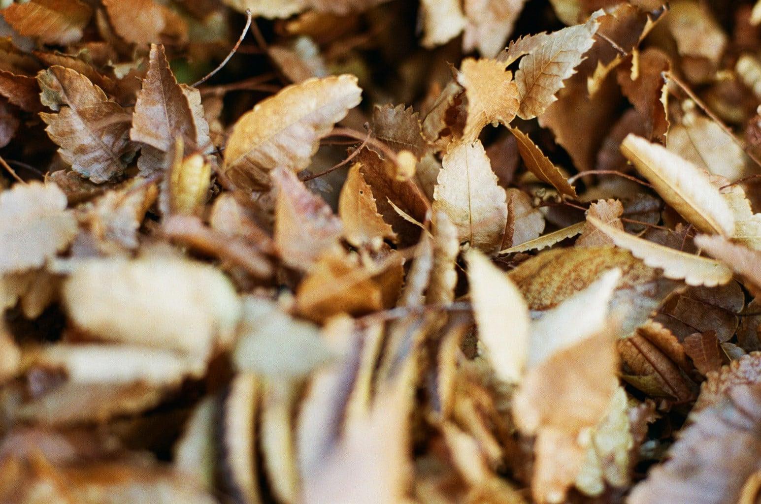 小雪イメージ 落葉の吹き寄せ