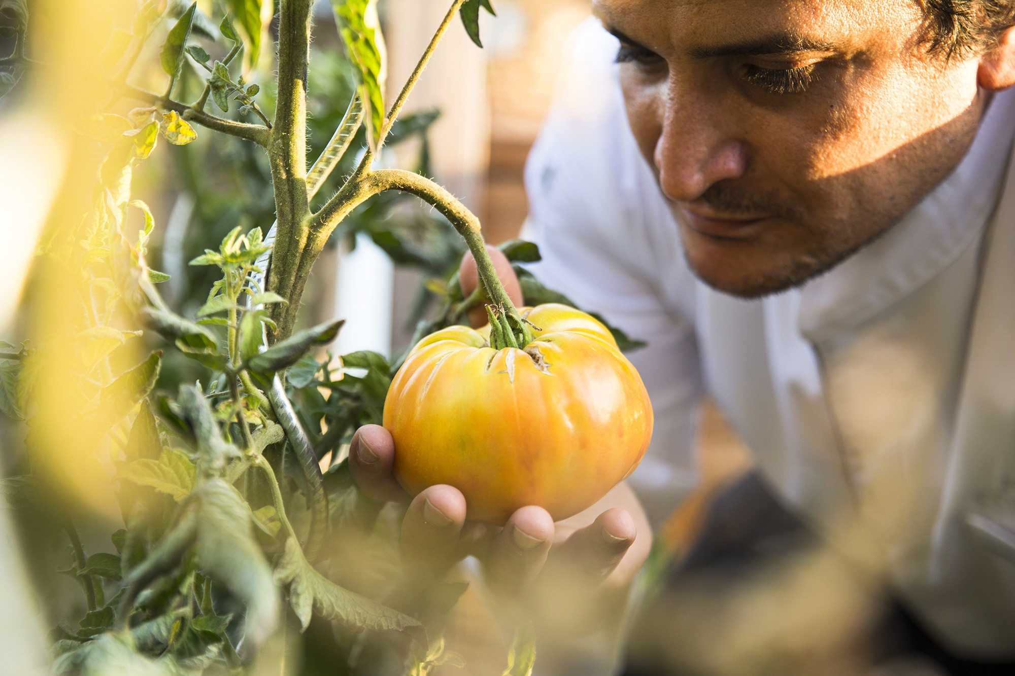 マウロの自宅の隣には自家農園があり、いつでも新鮮な野菜やハーブを収穫できる。