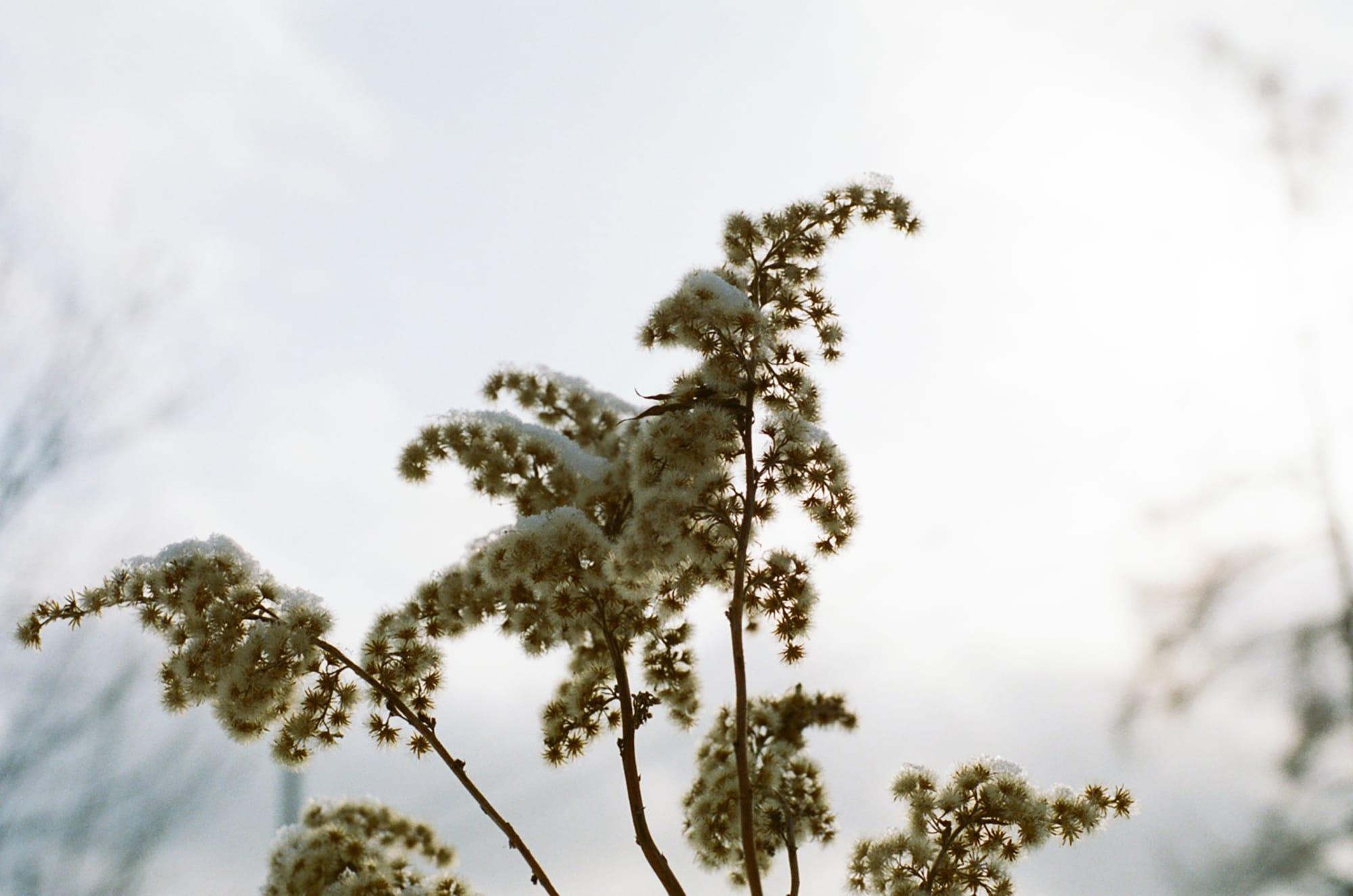 雑木林と空