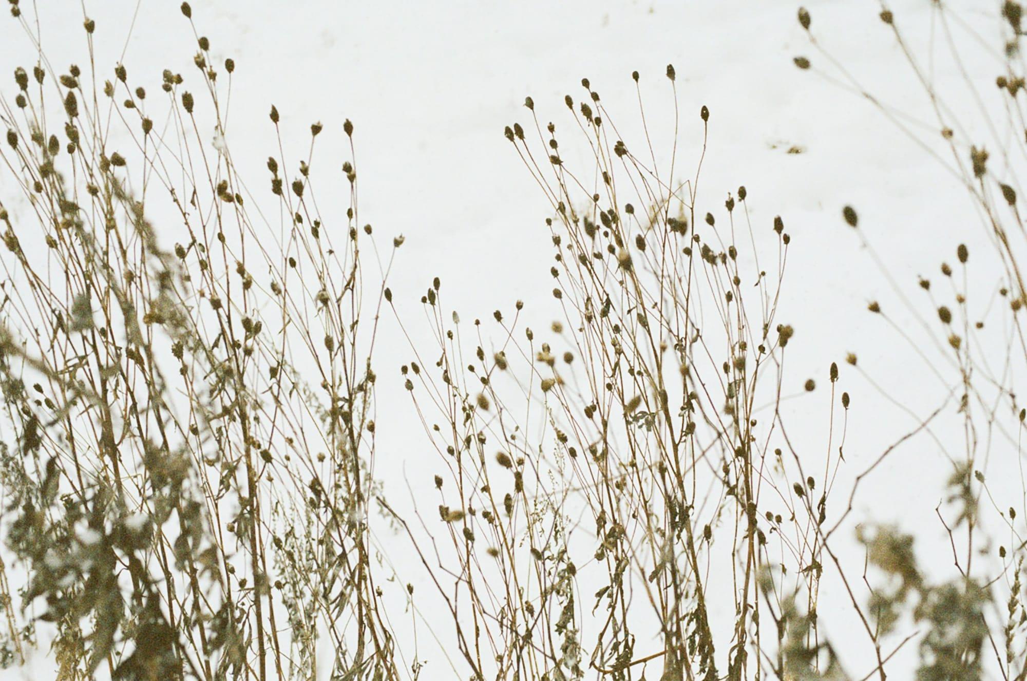 空と枯れ草