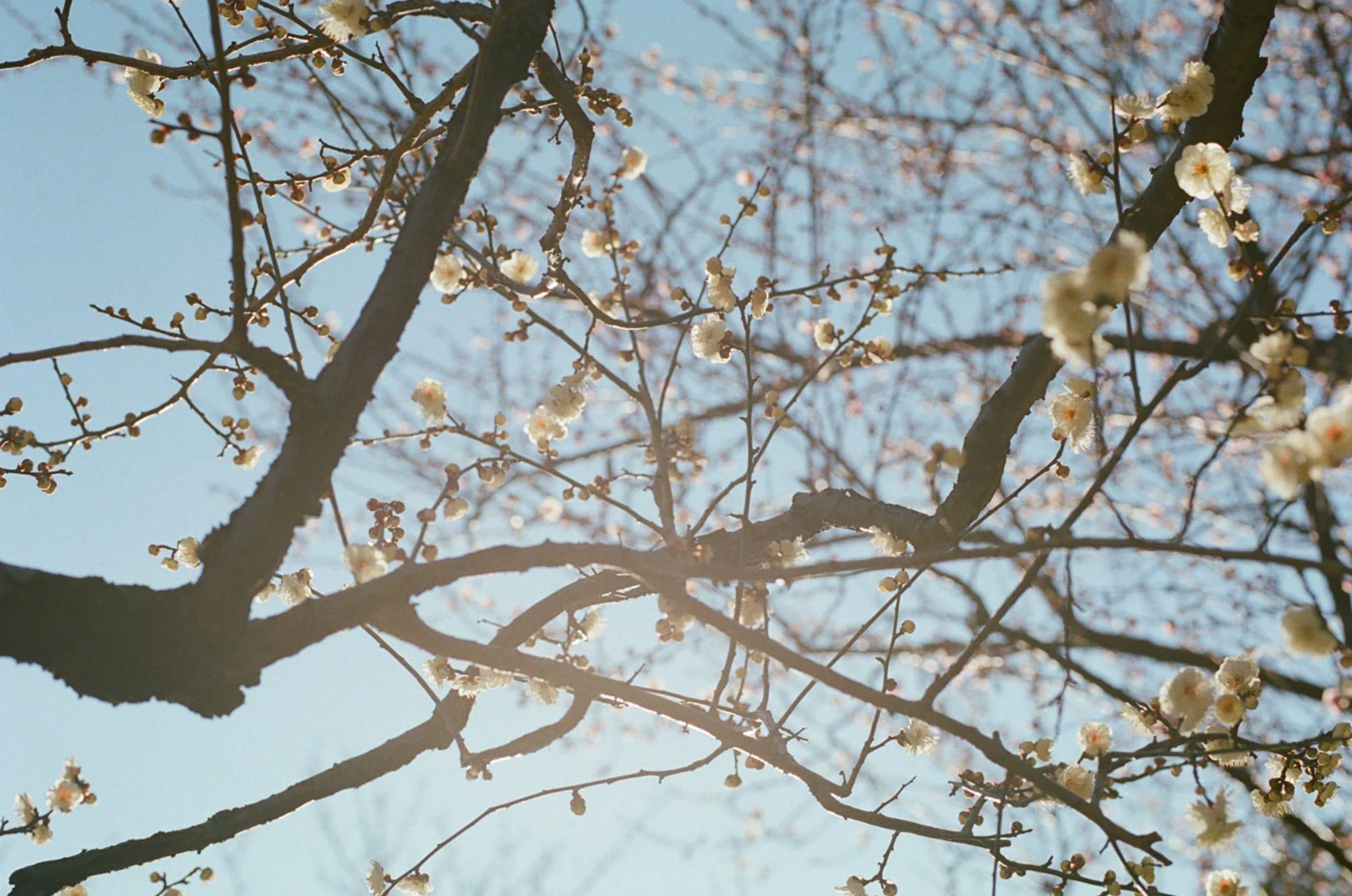花がさいた木々