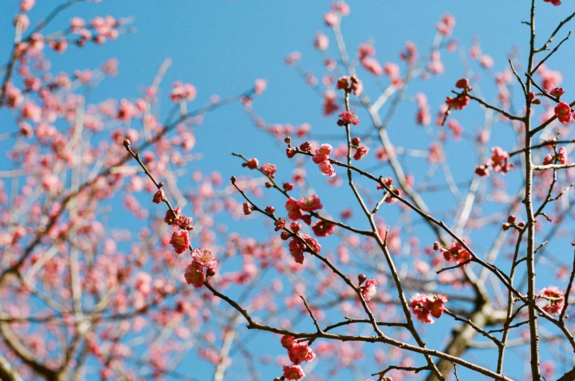 立春の歳時記・季寄せ