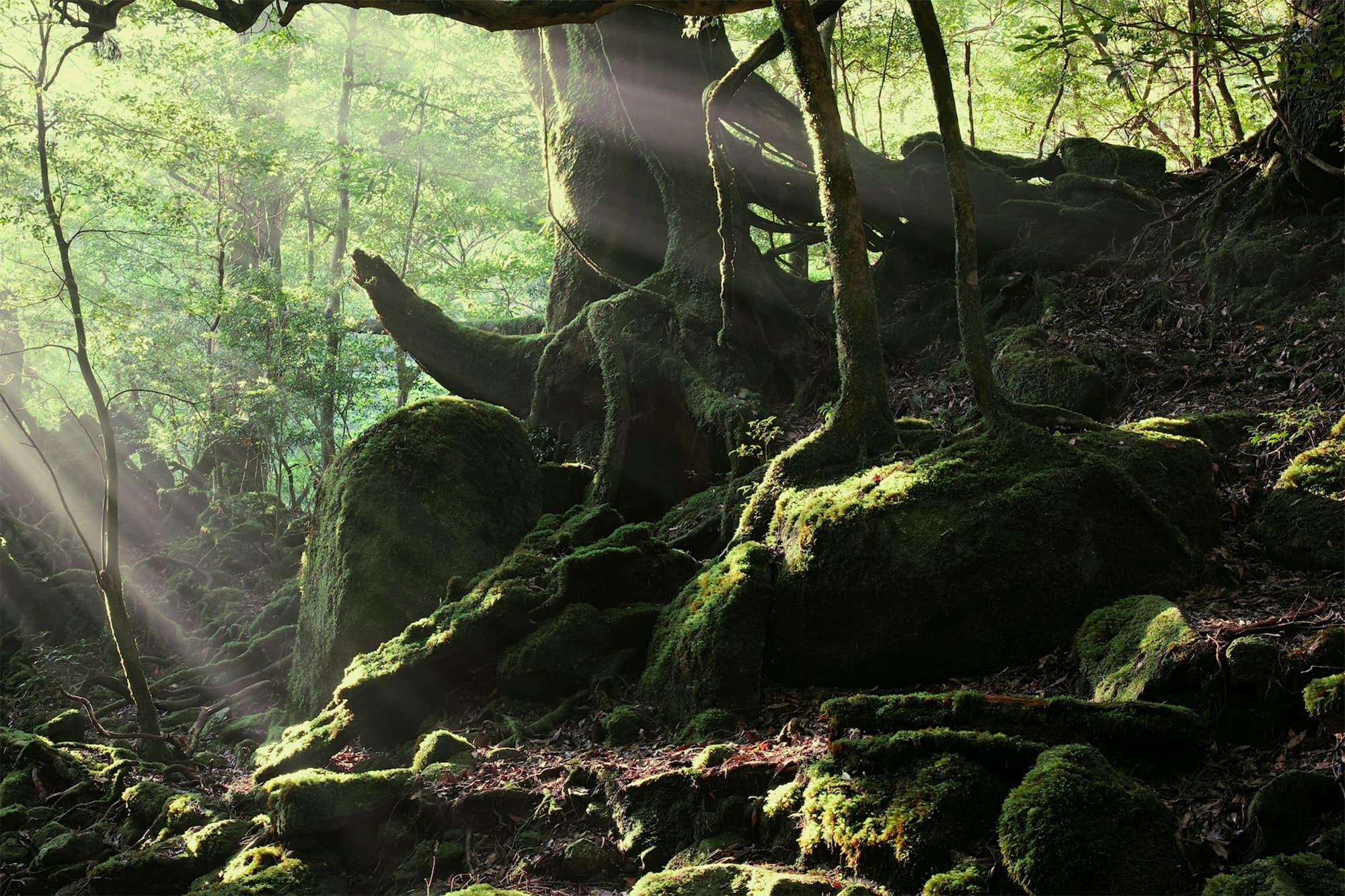 「サンカラホテル&スパ屋久島」(日本・鹿児島県)。樹齢数千年の屋久杉が見られる周辺の森林