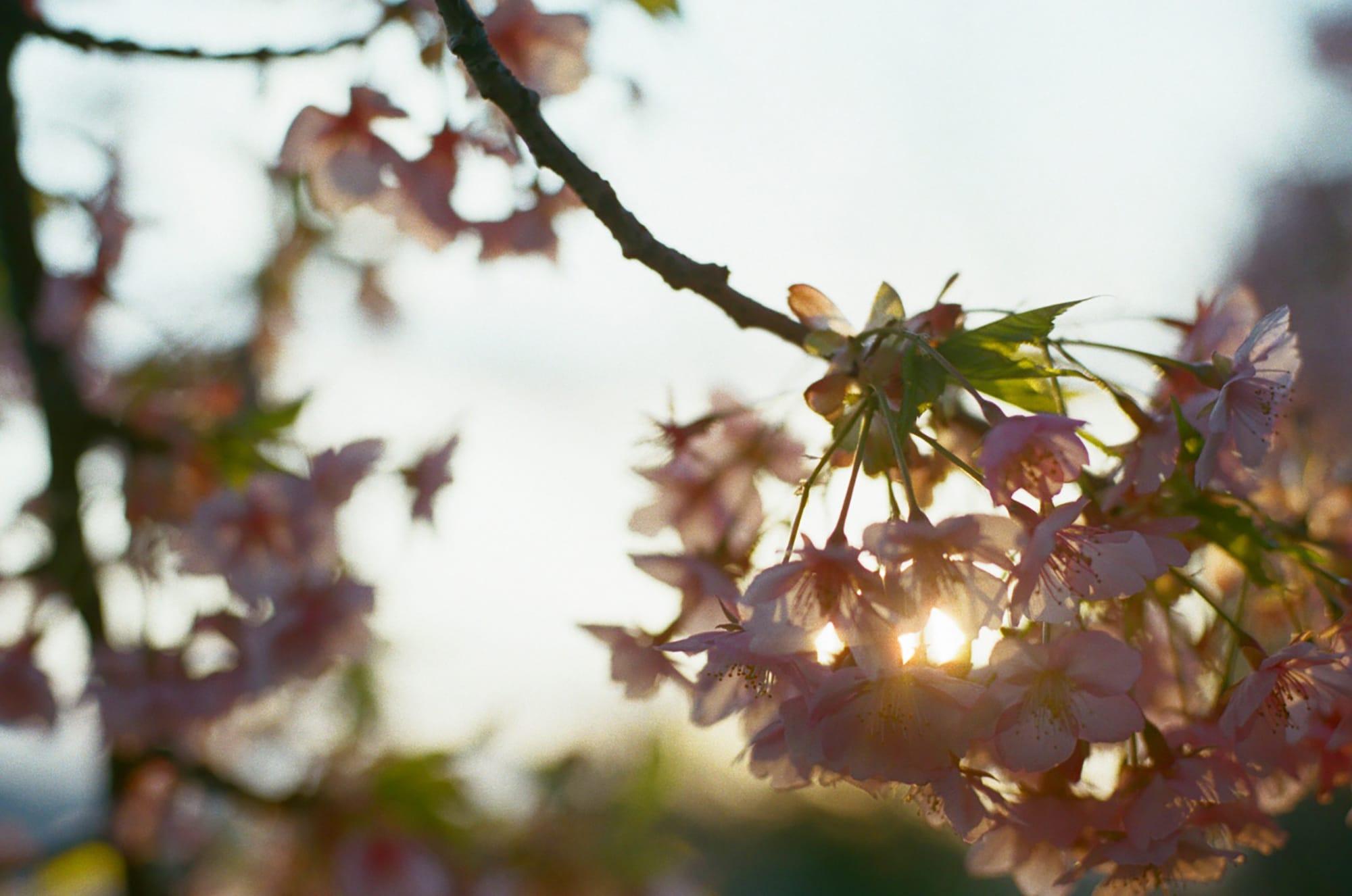 春分の歳時記・季寄せ