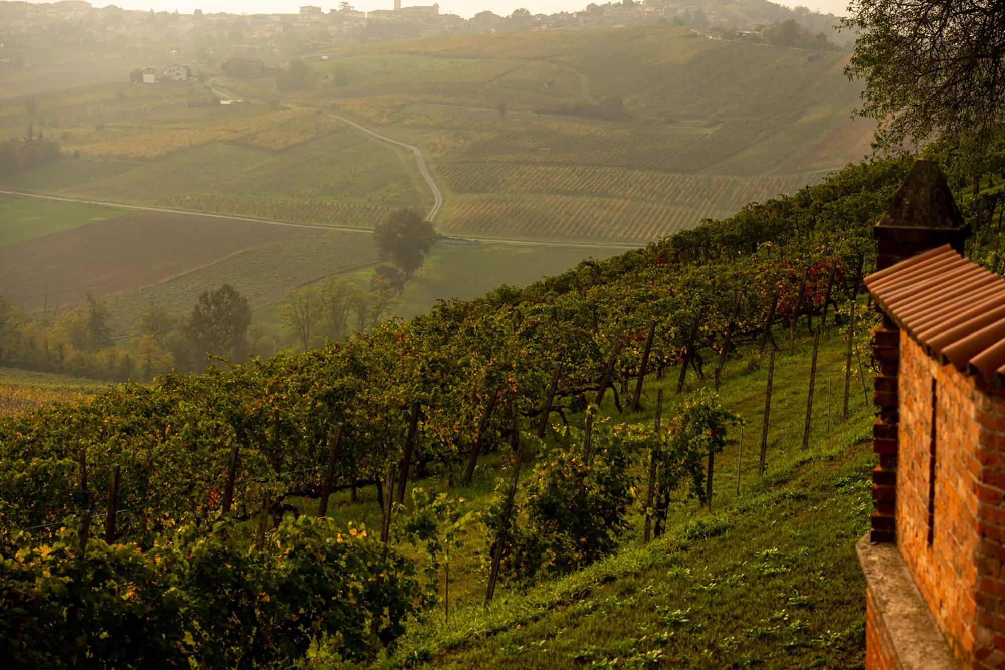午後遅く、「カステッロ・ディ・ルッツァーノ」のブドウ畑は暮色に染まる。歴史と自然を守るため、有機農法を実践している。