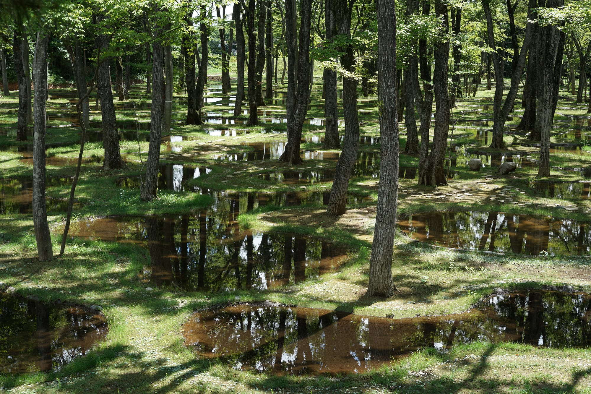 アートビオトープ那須にある「水庭」。木々のすき間から空が浮かび、水には木漏れ日が注ぐ。
