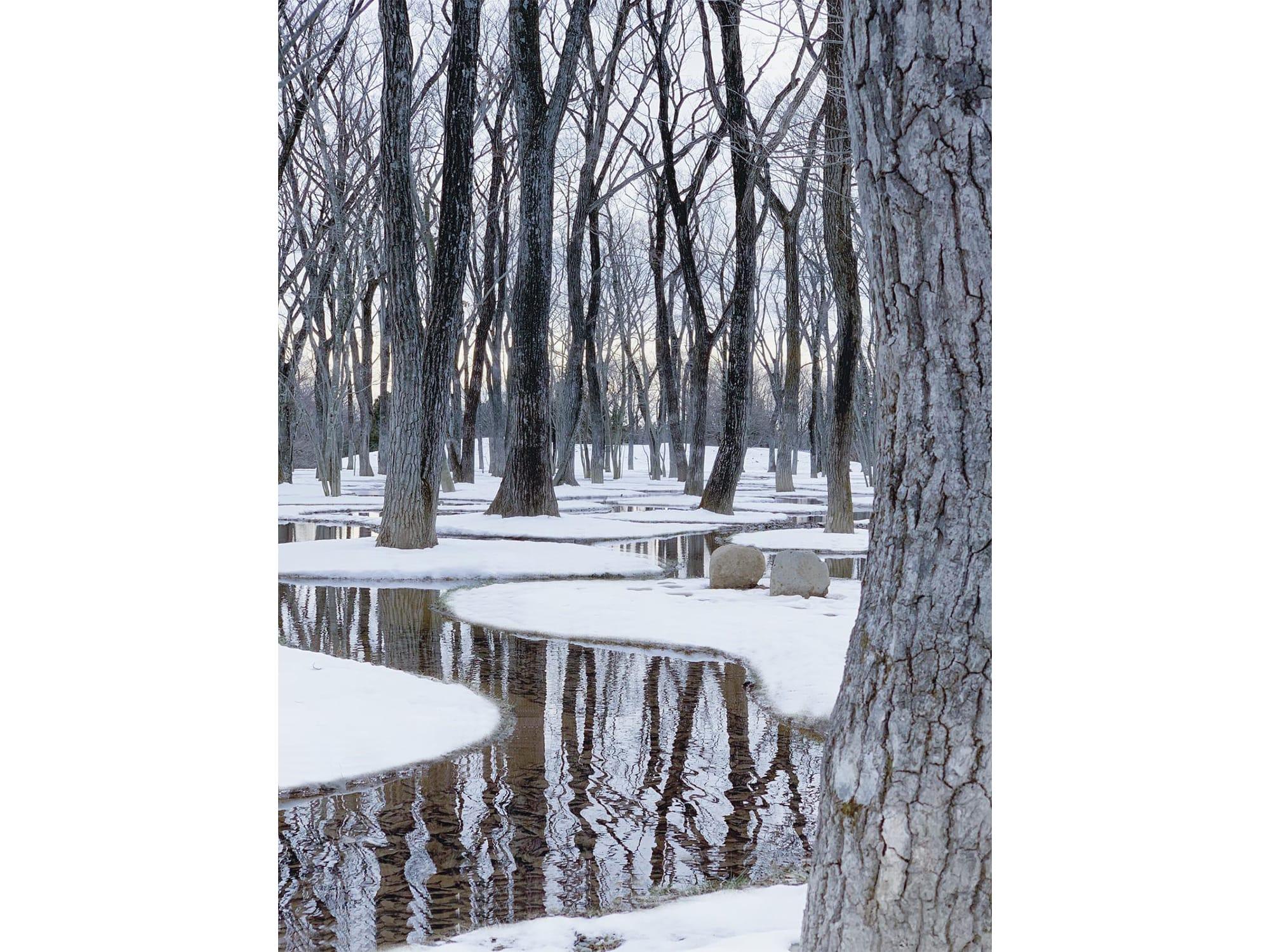 葉が落ち、雪で覆われた水庭には、木々の静かなる息づかいが聞こえてくるようだ。