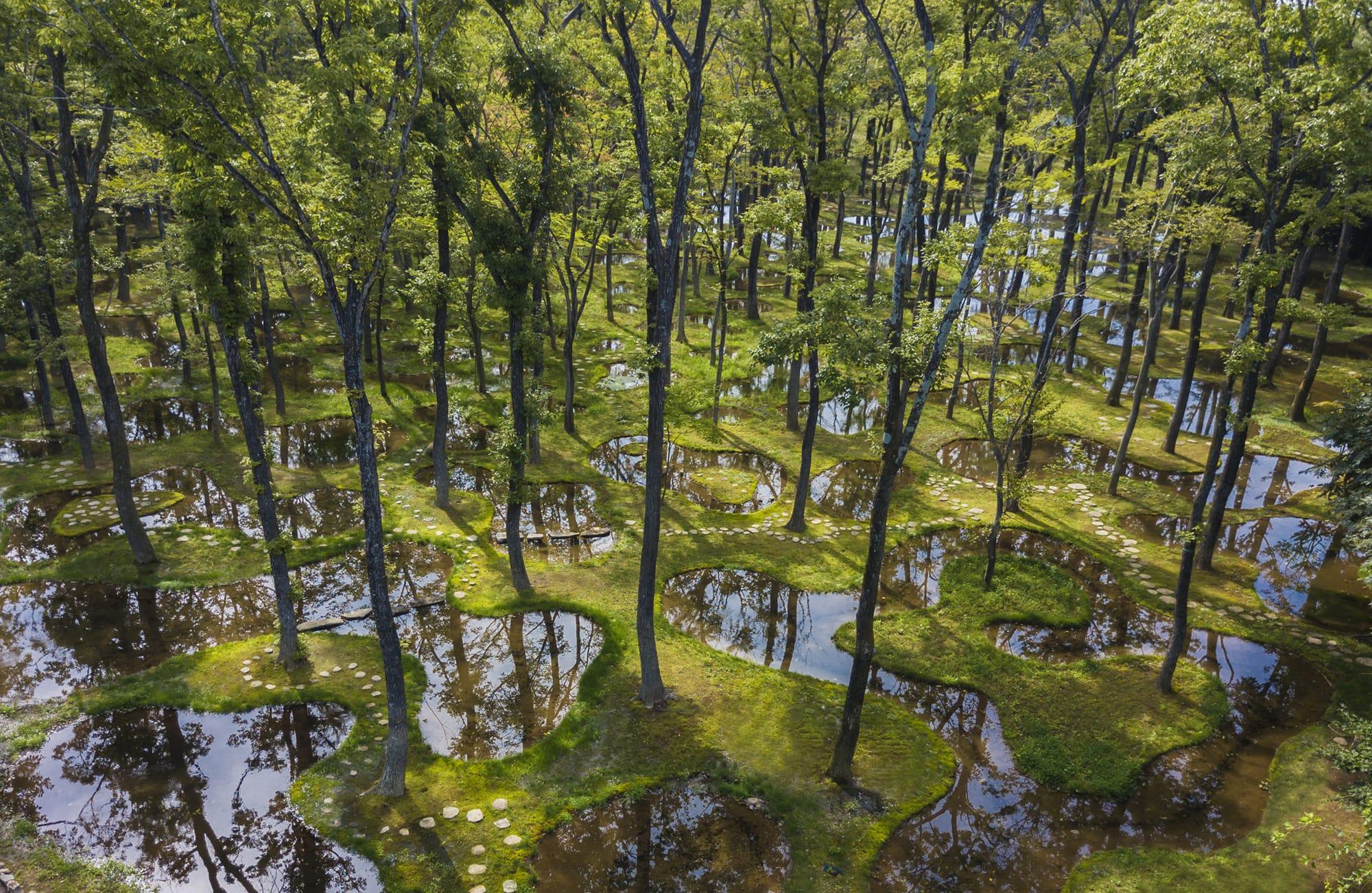 時間と共に木々は成長し、その姿を変えていく水庭。