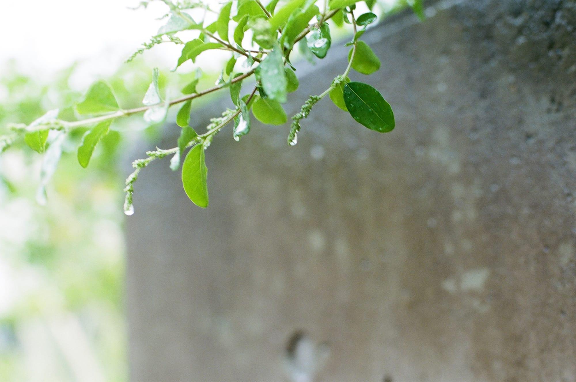 穀雨の歳時記・季寄せ