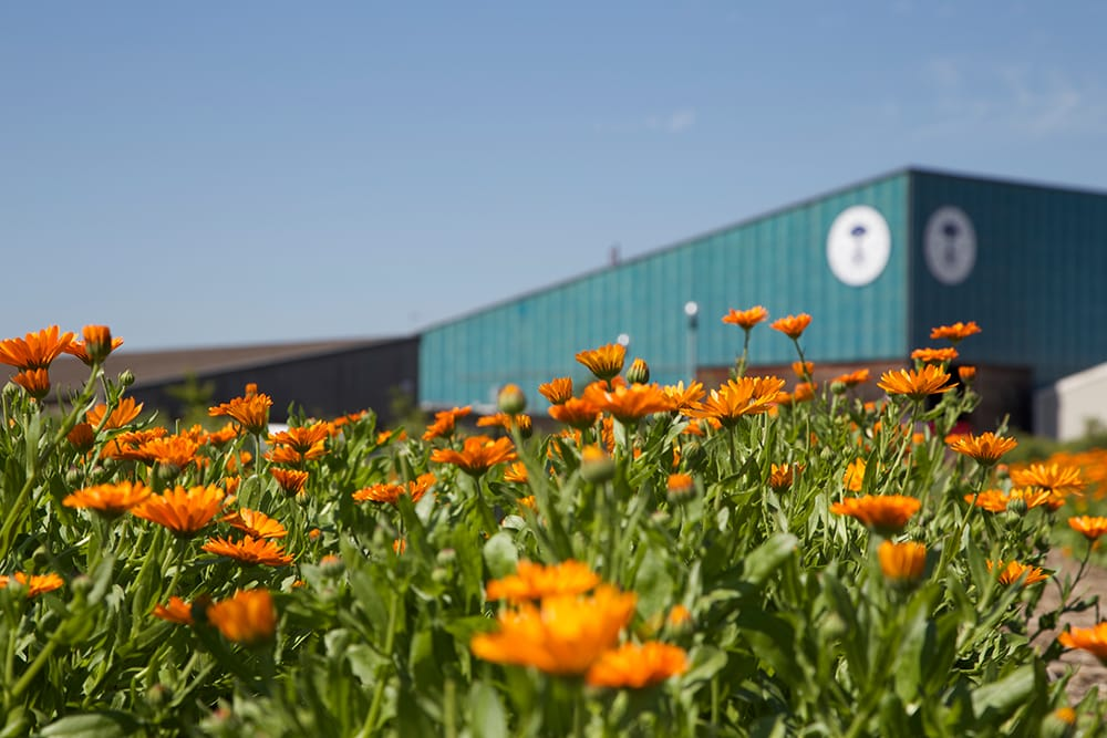 イギリスのノース・ドーセットにあるNYRの本社。エコファクトリーがあり、周囲にはオーガニックガーデンも広がる。
