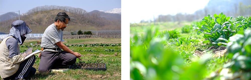 左:まほろばの創業者でもある夫、宮下周平とともに「0-1テスト」で肥料設計。右:露地栽培で越冬して芽吹いた小松菜の菜花。