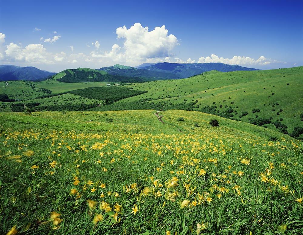 緑の絨毯を黄色に染めるニッコウキスゲをはじめ、ヤナギランやクガイソウなど、夏場の霧ヶ峰(標高1,925m:車山 日本百名山)は可憐な花が咲き誇る天空の楽園。まずはリフトで車山山頂へ。北アルプス、南アルプスの3,000m級の山々を見渡し、山頂から霧ヶ峰への散策をのんびりと楽しもう(往復3~4時間)。DATA 展望リスト(車山高原スカイパークリゾート 長野県茅野市北山3413/0266-68-2626) 車山高原山麓駅~車山山頂駅 往復 大人1,700円(7/23~8/16は、1,900円)
