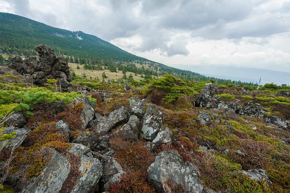静寂の森と湖の北八、主峰赤岳(標高2,899m 日本百名山)を筆頭に雄々しい山容の南八。変化に富む八ヶ岳の南北境界付近に位置する坪庭(つぼにわ)は、自然が創り出した芸術作品。溶岩石むき出しの宇宙空間のような地、縞枯れ現象、紅葉、樹氷……、四季折々独特な表情を見せる。散策路周遊の所要時間は、30~40分。