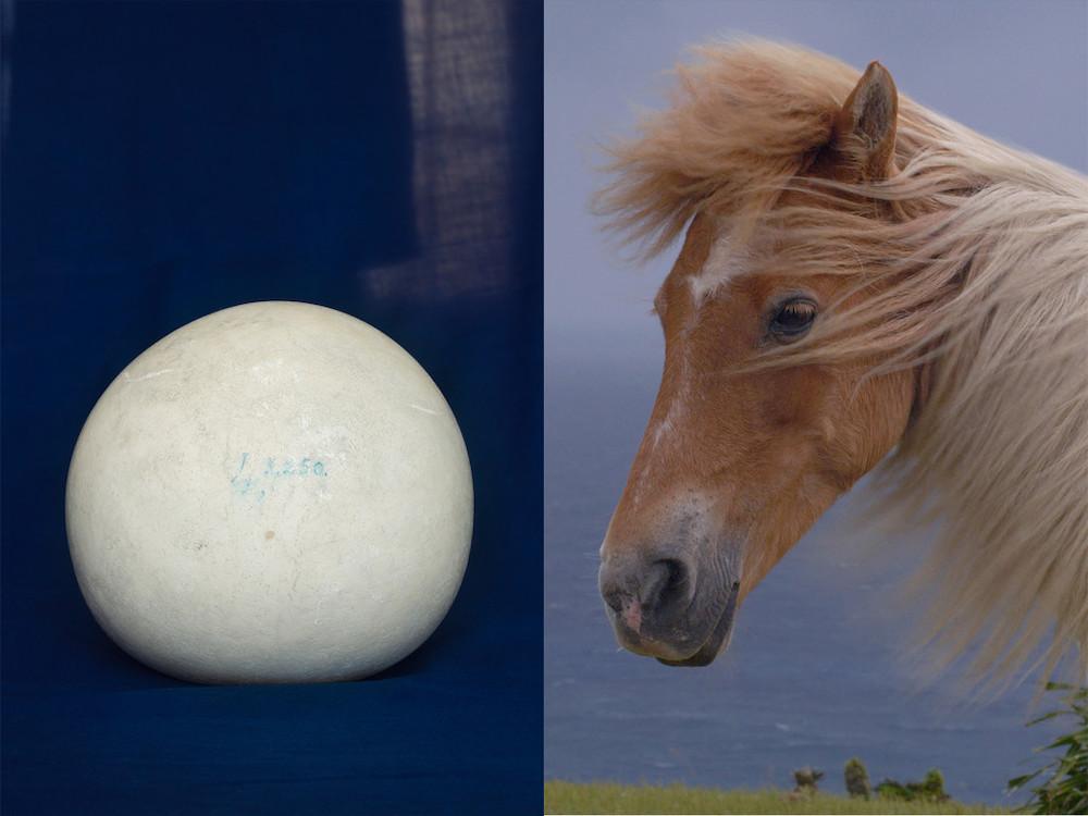 左:Bezoar| 2018 | intestinal stone of horse | 19th century | 50 x 40 cm | High pigment inkjet print| Musée Vétérinaire in Paris 右:Image from Yorishiro | 2020 | 19'35'' | 4K video | Japan