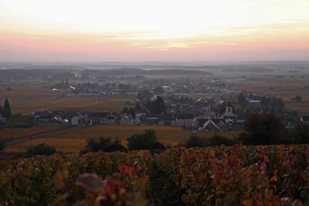 モレ・サン・ドニの晩秋の夕暮れ。色づいたブドウの葉が斜面を覆いつくす。久野と伊藤のワイン造りはまだ続く。