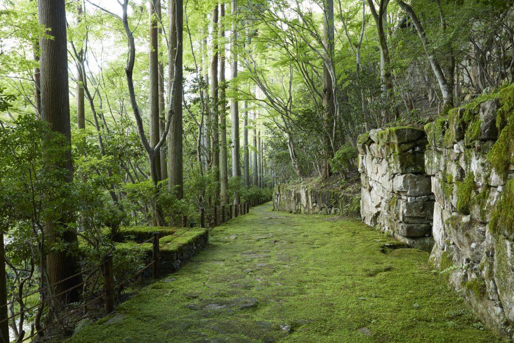 苔むした石組みや生い茂る木々は、まるでアンコールワットを彷彿とさせる。