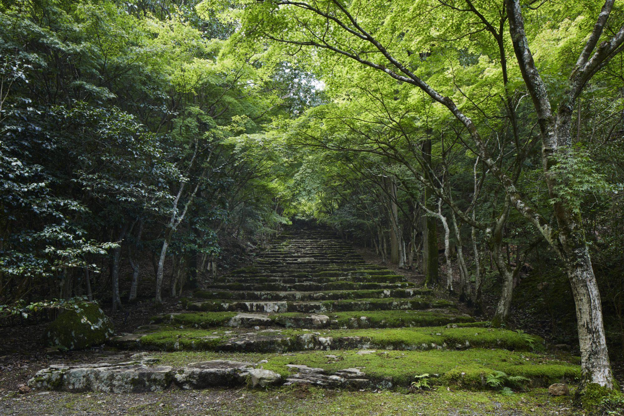 神社仏閣の参道を思わせる石段。この最上部には石組みの円形広場がある。