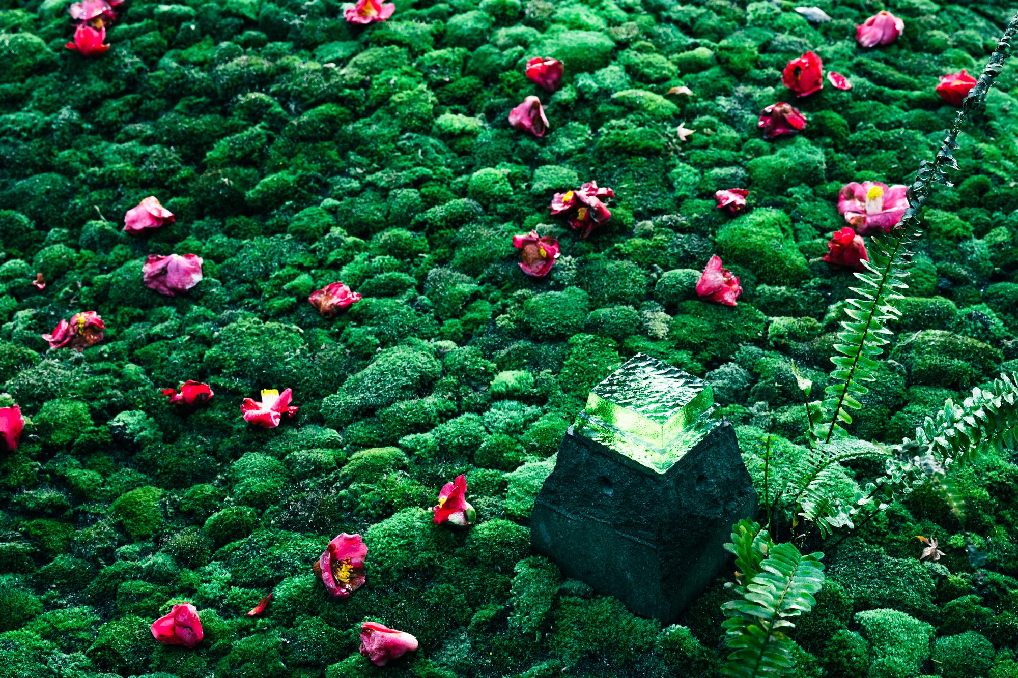 椿と苔と石燈ろう