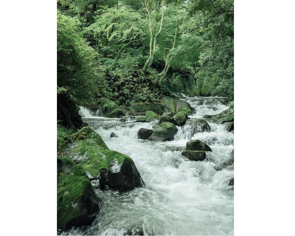 湯河原万葉公園の渓流