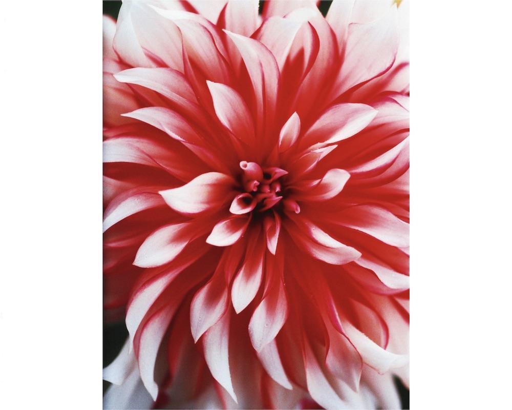 蜷川実花earthly flowers, heavenly colors