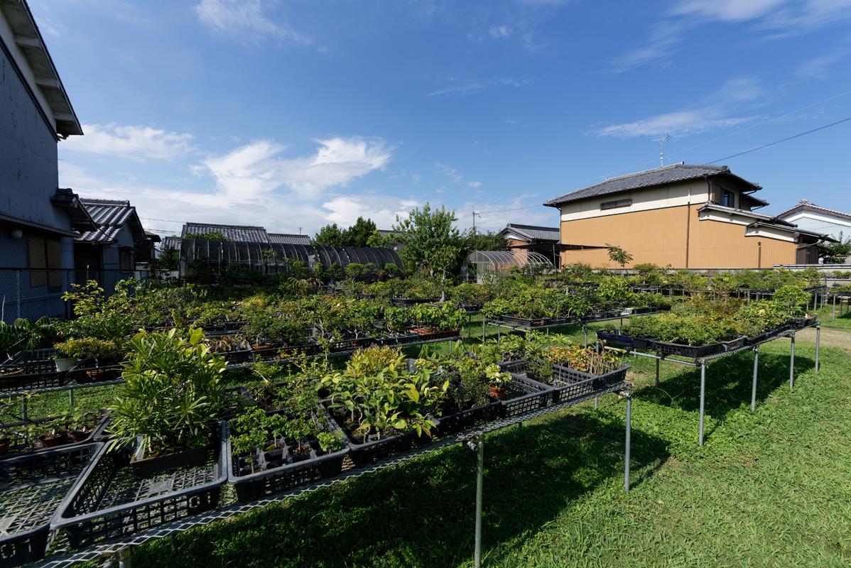扱うのは基本的に和の草木。常緑の広葉樹を中心に、種木から盆栽まで100種ほどが揃う。
