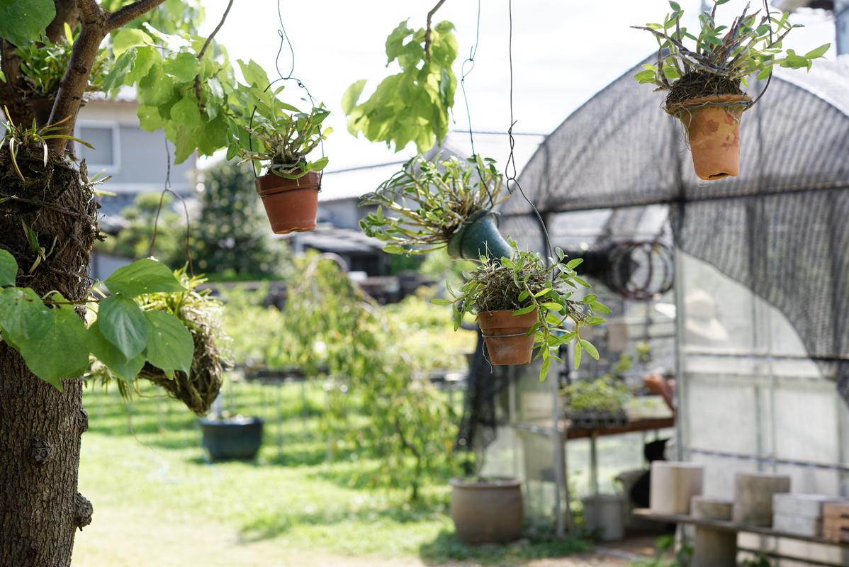 もとからあった果樹なども含めて、敷地内の至る所に植物が茂る。