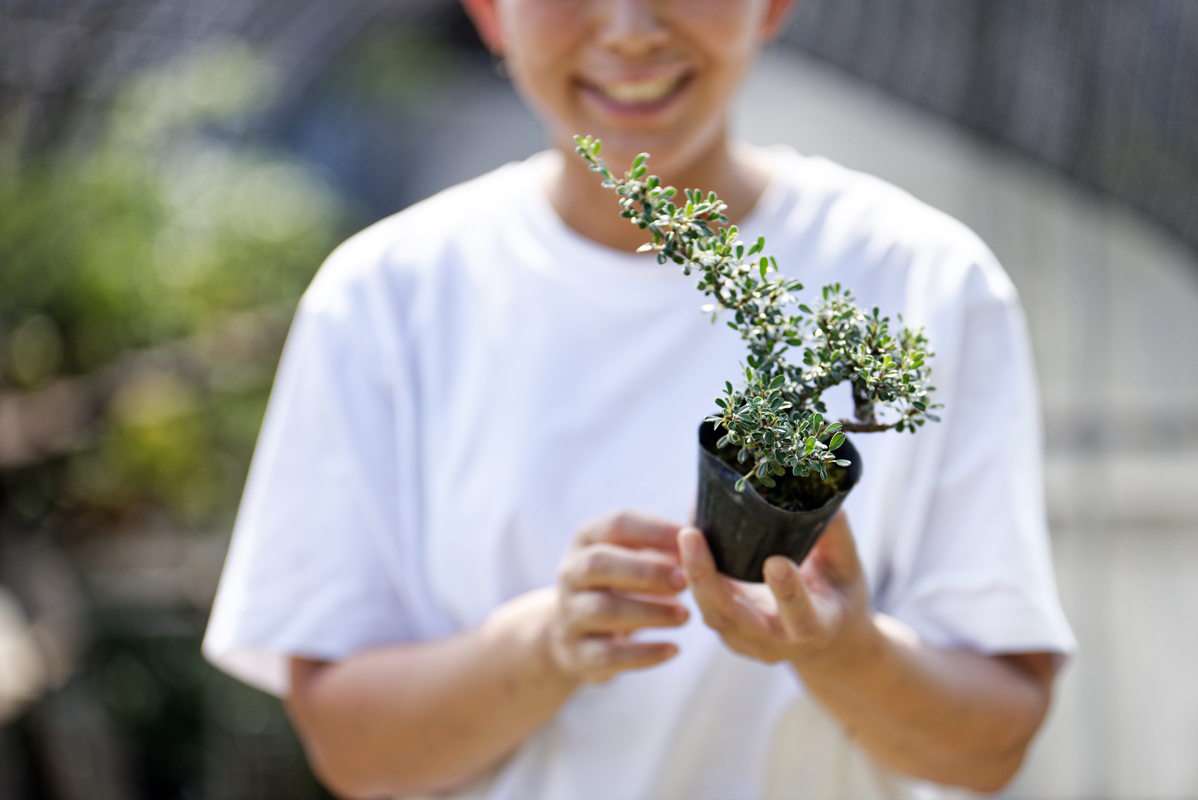 オープン当初に植えたシロシタン。4年かけてようやく販売できるサイズまで成長した。
