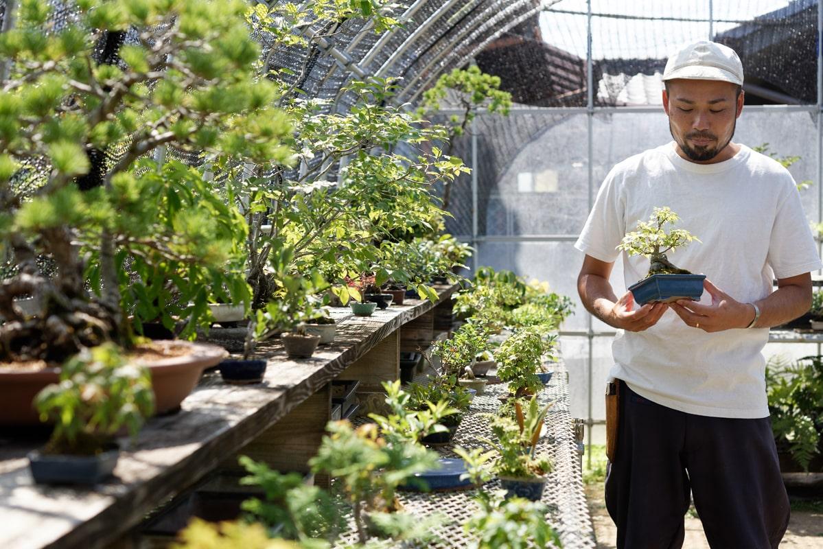 コロナ禍以降は変則的だが、東京などでも年に1、2回は盆栽の展覧会を実施している。完成品は3000円前後~。