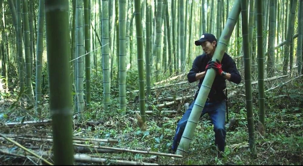 伐り終えた竹を素早く抱えると、前へ進み、竹の自重を利用して緩やかに横倒しにする。